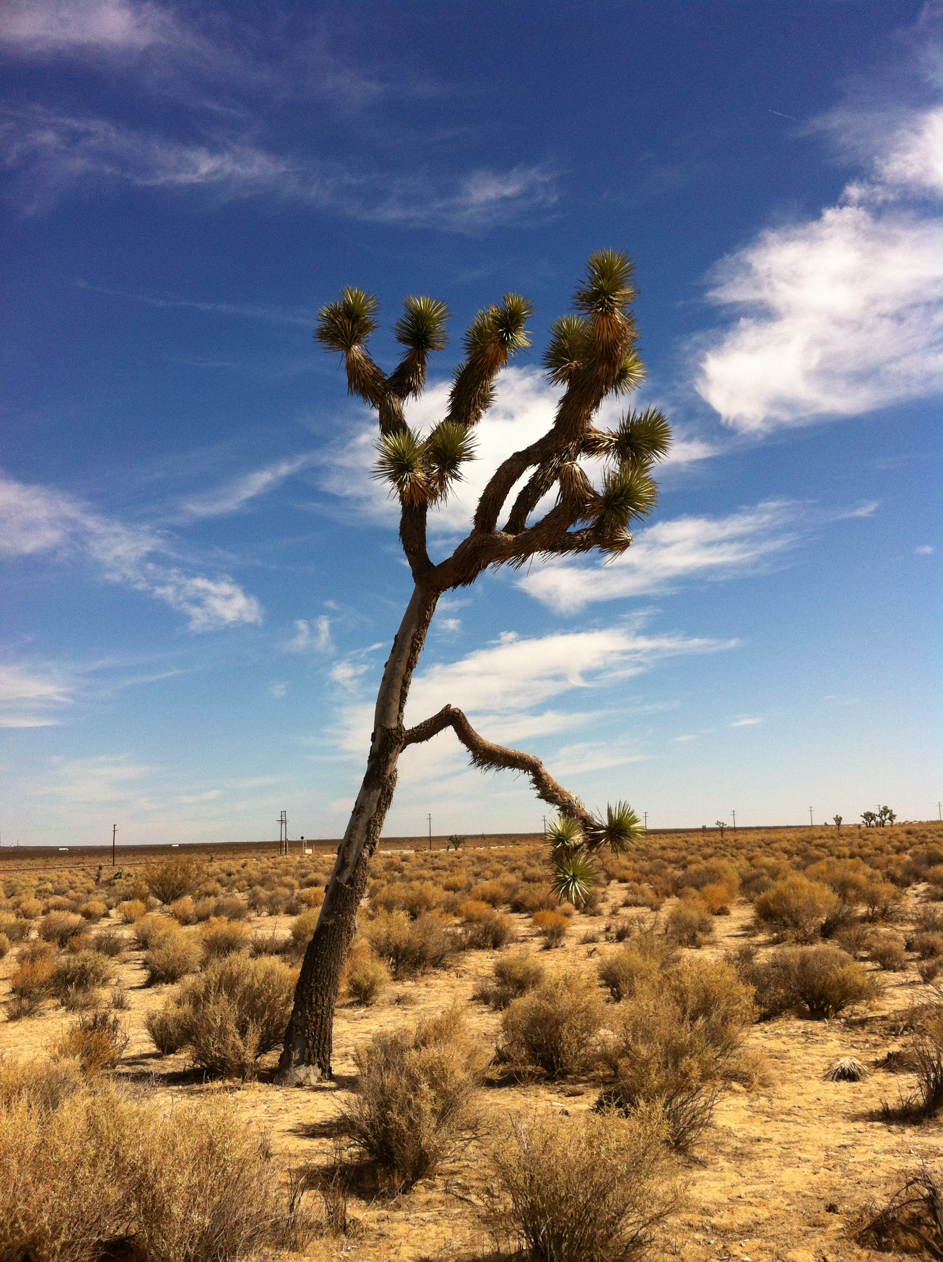 UltimateGraveyard Mojave Desert Filming & Photography Location - Joshua Trees & Train Tracks