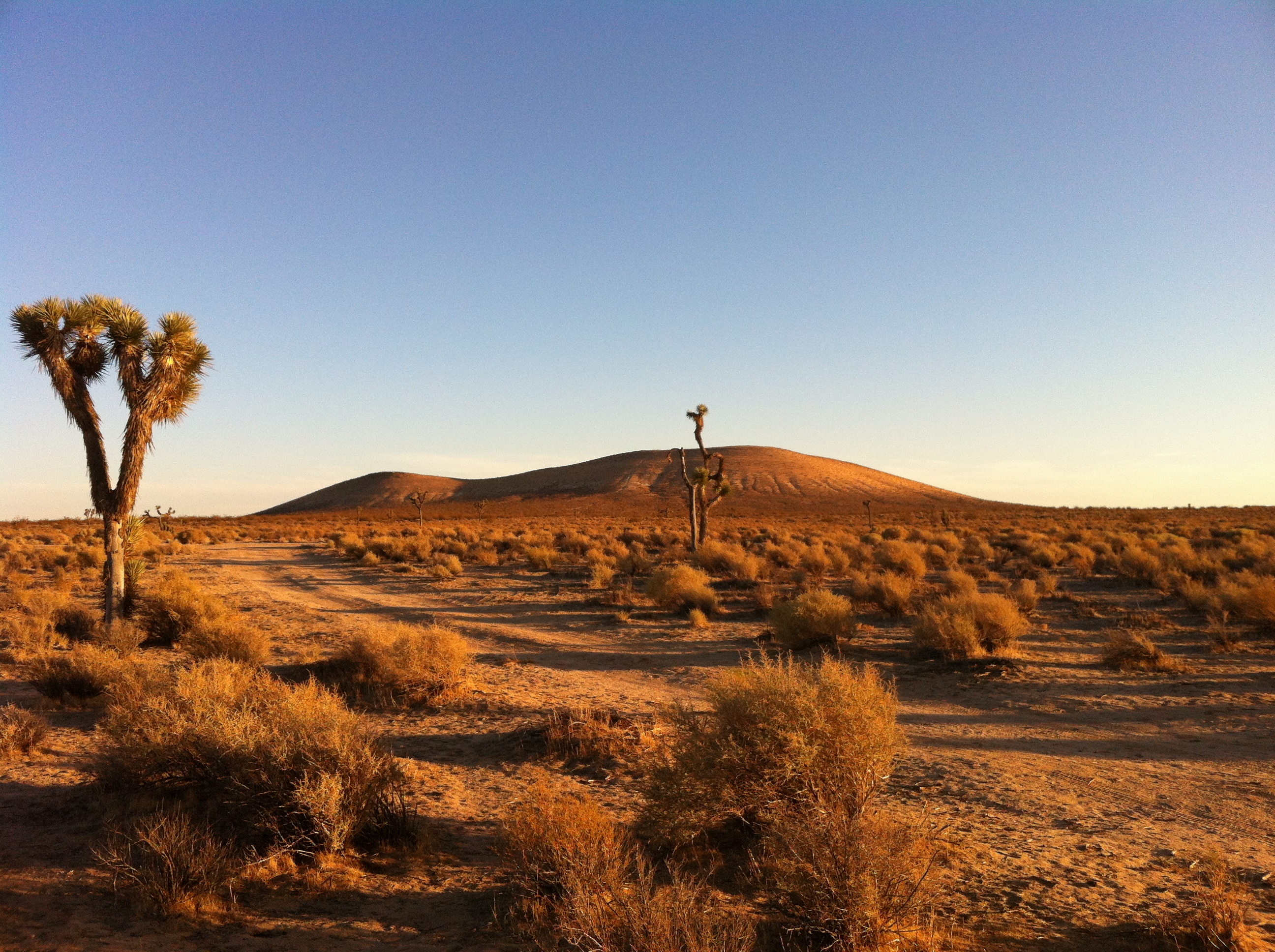UltimateGraveyard Mojave Desert Filming & Photography Location - Joshua Trees & Sunset Mountain View