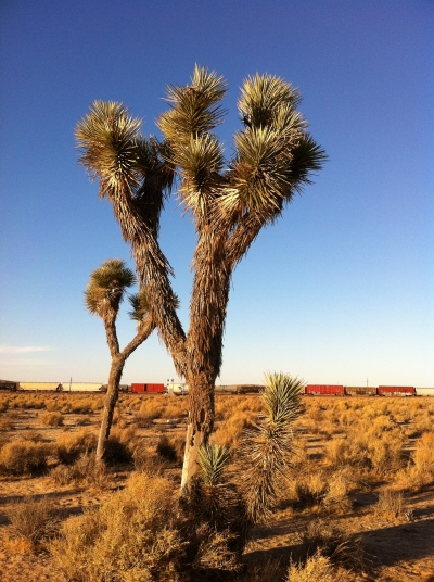 UltimateGraveyard Mojave Desert Filming & Photography Location - Joshua Trees & Railroad Trains