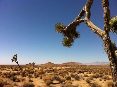 UltimateGraveyard Mojave Desert Filming & Photography Location - Joshua Trees & Mountain Views