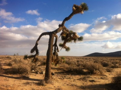 UltimateGraveyard Mojave Desert Filming & Photography Location - Joshua Trees